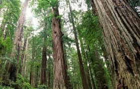 eco friendly hardwood resized 600