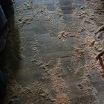 sawdust floor