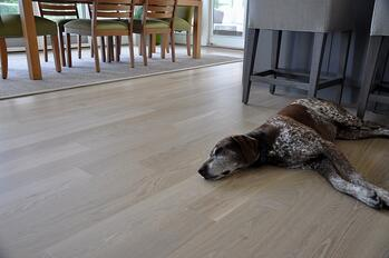Dogs and hardwood floors get along great!