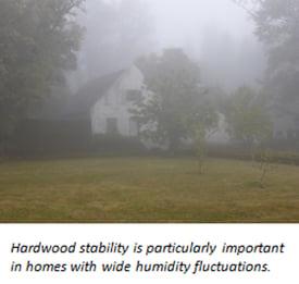 foggy_home